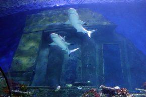 Sealife Haie